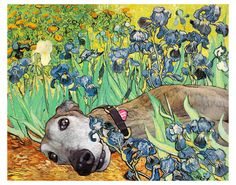 "Greyhound Art Print - ""Irises"". via Etsy."