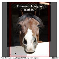 Animated Birthday Greetings For Facebook Equine Nag