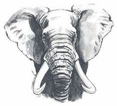 Trendy Ideas For Tattoo Elephant Head Animals Elephant Head Drawing, Elephant Head Tattoo, Elephant Sketch, Elephant Face, Elephant Tattoo Design, African Elephant, Realistic Elephant Tattoo, Elephant Watercolor, Animal Sketches