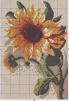 Flashup   SUNFLOWER  PAGE 1 OF 2