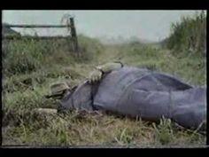 ▶ Sesame Street - Everybody Sleeps - YouTube
