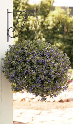 Drought tolerant gardens on pinterest drought tolerant for Low maintenance drought tolerant plants