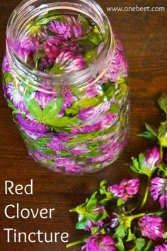 Remedies Home Red Clover Tincture Holistic Remedies, Natural Health Remedies, Herbal Remedies, Healing Herbs, Medicinal Plants, Natural Healing, Herbal Tinctures, Herbalism, Natural Medicine