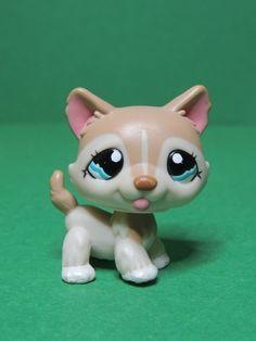 #1012 chien dog chiot Husky brown puppy blue eyes LPS Littlest Pet Shop Figure
