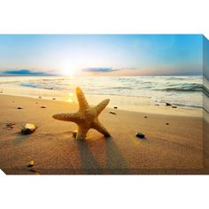 Gallery Direct Beach Starfish Oversized Gallery Wrapped Canvas