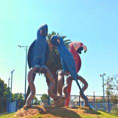 Rio Grande Do Norte, Paraiba, Brazil, Places, Ms, Traveling, Most Beautiful Cities, Bullock Cart, Viajes