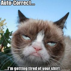 "Here's great collection of some Grumpy Cat Memes in People style. Just read out these ""Top 22 Grumpy Cat Memes People"" and get some fun and laughing point for laugh. Grumpy Cat Quotes, Funny Grumpy Cat Memes, Funny Animal Memes, Funny Cats, Funny Animals, Funny Memes, Grumpy Kitty, Cats Humor, Weird Cats"