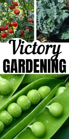 During WWI and WWII, the economy was hurting and many Americans struggled to survive. Victory gardens grown in most backyards provided extra food for the family, giving them the nutrition they needed without great expense. You could even grow a front yard vegetable garden if you're short on space!