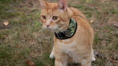 Get moving with a Petoodles harness. Wessie the #cat plays with a shrew. petoodles.net