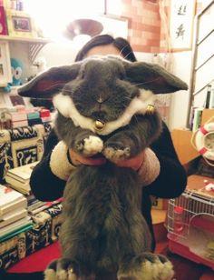 big fluffy bunny