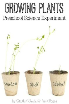 Your Preschool And Kindergarten Kids Will Love Growing Plants At Home Or In  The Classroom With This Fun Science Experiment! What Do Plants Need To Grow?
