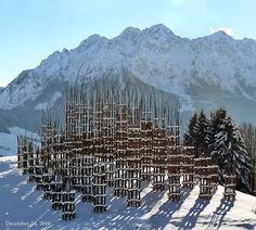 Giuliano Mauri: Cathedral / Plaited twig columns with hornbeam trees planted within / when the scaffolding eventually rots, the cathedral of living hornbeams will remain