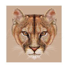 Vector Illustrative Portrait of a Mountain Lion. Cuguar Cat. Poster autor…
