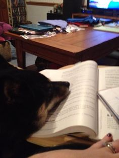 Charissa studies along with her trusty pup | Where We Study Photo Contest #wherewestudy #studyspaces #onlinelearning