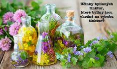 """Tinktura je vlastně """"bylinka vyluhovaná v alkoholu"""" (nejč. vodce). Nejlepší je tinkturu připravovat z čerstvých bylin. Byliny musejí být čisté, krájíme je keramickým nožem (ne kovovým). Pak je vložíme do sklenice (nejlépe zábruska z tmavého skla) a zalijeme lihem o koncentraci 40 % a více. Na litr lihu se doporučuje asi 150-250 gramů čerstvých bylin (z toho je patrné, že tinktura je opravdu """"koncentrát"""" a důležité dodržovat dávkování). Sušených bylin... Glass Vase, Herbs, Liquor, Herb, Spice"""