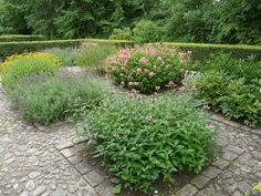 the secret herb garden in aalbord