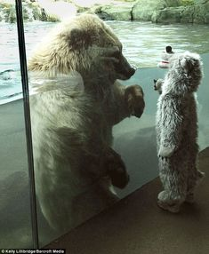 El oso y el niño disfrazado de oso. Increíble encuentro.