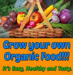 Organic Vegetable Gardening - Is It Magic?