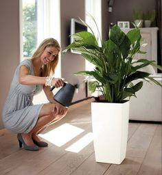 how to take car for plants durning winter? elho