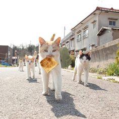海外「オシャレでかっこいいw」 スタイリッシュに向かって来る日本のネコの写真がコラ祭りに 海外の反応|海外まとめネット | 海外の反応まとめブログ