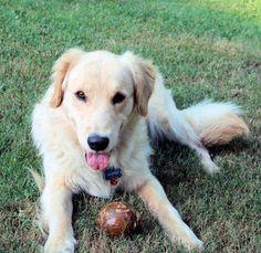 Our boy eats Bil-Jac every day!  #BilJac #Dog #HappyDog