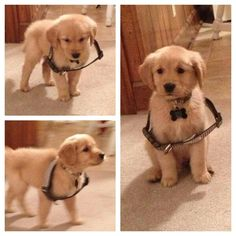 Put your puppy in it's big dog collar & take a picture. That way when it's full-grown you can see the diffence from the little one.