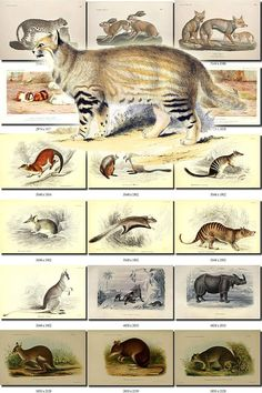 MAMMALS-49 Collection of 287 vintage images animals collage