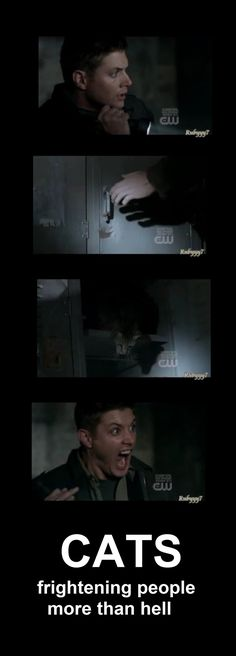 cats more feared the hell....I have this episode saved on my dvr for when i'm having a bad day. I fast forward to about ten minutes before this scene when he first starts freaking out. The song at the end of the episode is also one of my favorite moments of the entire series.