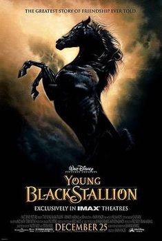 Black Horse Photo: This Photo was uploaded by pearl-moon. Find other Black Horse pictures and photos or upload your own with Photobucket free image and . Black Horses, Dark Horse, Mini Horses, Black Stallion Movie, Pur Sang, Young Black, Big Black, Horse Pictures, Animal Pictures