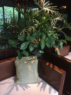 Pots with plants for inside