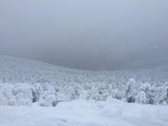 Jay Peak ski resort, looking down from the summit into a sea of trees [1920x1080] #nature and Science