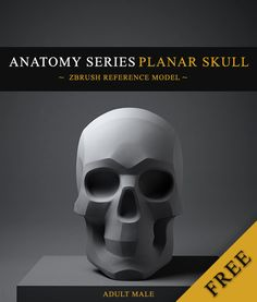 Free Adult Male Planar Reference Skull (ZBrush file) by Daniel Crossland.