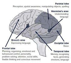 Brain Science, Medical Science, Science Biology, Science Education, Health Education, Life Science, Physical Education, Computer Science, Brain Anatomy