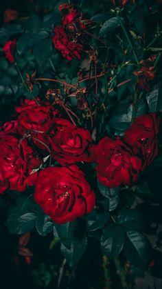 Floral Wallpaper Iphone, Watercolor Wallpaper Iphone, Flowery Wallpaper, Sunflower Wallpaper, Rose Wallpaper, Flower Lockscreen, Pink Flowering Trees, Aesthetic Roses, Aesthetic Green