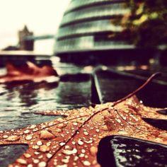 City Hall #london #autumn