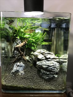 Nano Aquarium, Aquarium Design, Planted Aquarium, Aquarium Fish, Tree Frog Terrarium, Fish Tank Terrarium, Fish Tank Themes, Fish Aquarium Decorations, Amazing Aquariums
