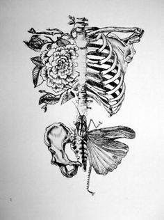 Butterfly Ribcage
