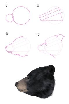 Realistic Drawings How to Draw Animals: Bears and Pandas, and Their Anatomy Drawing Lessons, Drawing Techniques, You Draw, Learn To Draw, Realistic Drawings, Easy Drawings, Urso Bear, Bear Sketch, Bear Paintings