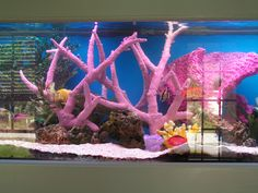 Image detail for -. with saltwater fish tank - The Hull Truth - Boating and Fishing Forum WOOHOOO I think that I can get this going for my underwater set! Little Mermaid Broadway, Little Mermaid Play, Little Mermaid Birthday, Saltwater Fish Tanks, Underwater Theme, Under The Sea Party, Salt And Water, Crafts For Teens, Aquarium Fish