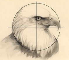 Mark Bornowski: How to draw an eagle head Pencil Art Drawings, Bird Drawings, Animal Drawings, Art Sketches, Drawing Birds, Eagle Painting, Feather Painting, Artist Grid, Eagle Sketch