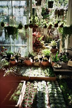 Lovely Indoor plants, cactus, and house plants. All the green and growing potted plants. Foliage and botanical design Indoor Garden, Indoor Plants, Plants Are Friends, Plant Aesthetic, Room With Plants, Cactus Y Suculentas, Cacti And Succulents, Plant Decor, Horticulture