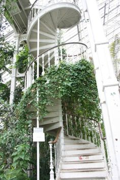 outside white spiraling staircase with green ivy