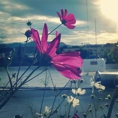 Días nublados y lluviosos en el #huerto de Imepp #mirasol #rain #flower #urbanfarming #ags http://ift.tt/2a4DxNM