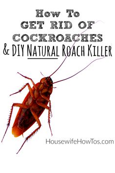How to get rid of cockroaches naturally and DIY natural roach killer from Housew… – The Environmental Alternative For Safer Pest Control Best Pest Control, Bug Control, Roach Killer, Household Pests, Household Tips, Household Products, Diy Products, Household Cleaners, Diy Cleaners