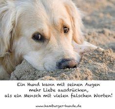 Hund kann mit seinen Augen...