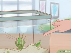 3 Ways to Play with Your African Dwarf Frog - wikiHow Dwarf Frogs, Pet Frogs, Pac Man, Habitats, Creatures, African, Play, Fish, Ideas
