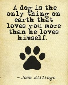 """"""" A Dog is the Only Thing on Earth that Loves You More Than He Loves Himself"""" #dogquotes"""