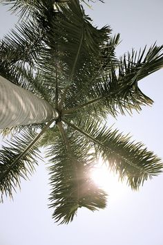 One of the greatest views one can have: laying on a beach, looking up at the palm trees on a sunny, wonderful day. And surrounded by my kids, family and closest friends.