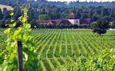 Shellproof buys Gusbourne Estate vineyard for £7m