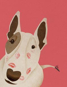 bull terrier kisses
